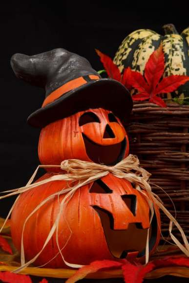 autumn-decor-decoration-decorative-41186
